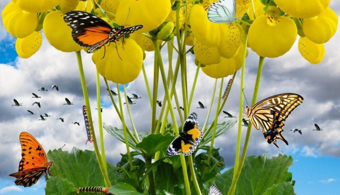 spring-1309428_1920